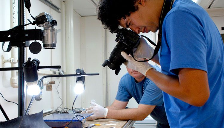 After ocean scientists sort deep-sea coral samples into their different types, they measure and photograph the specimens. <div class='credit'><strong>Credit:</strong> After ocean scientists sort deep-sea coral samples into their different types, they measure and photograph the specimens. </div>
