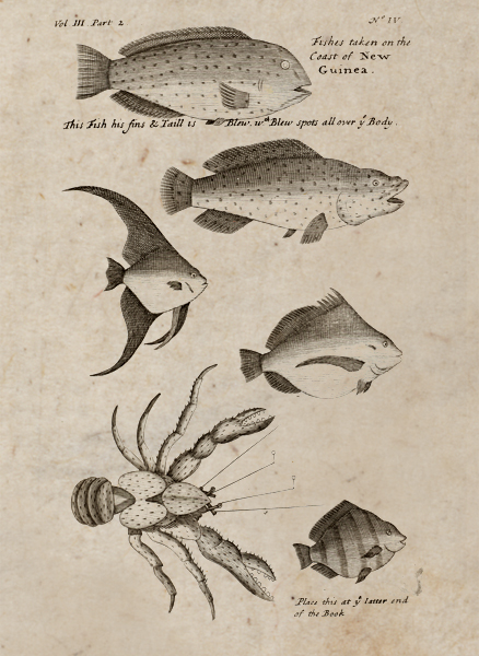Illustrations of fish and crab from New Guinea<div class='credit'><strong>Credit:</strong> Illustrations of fish and crab from New Guinea</div>