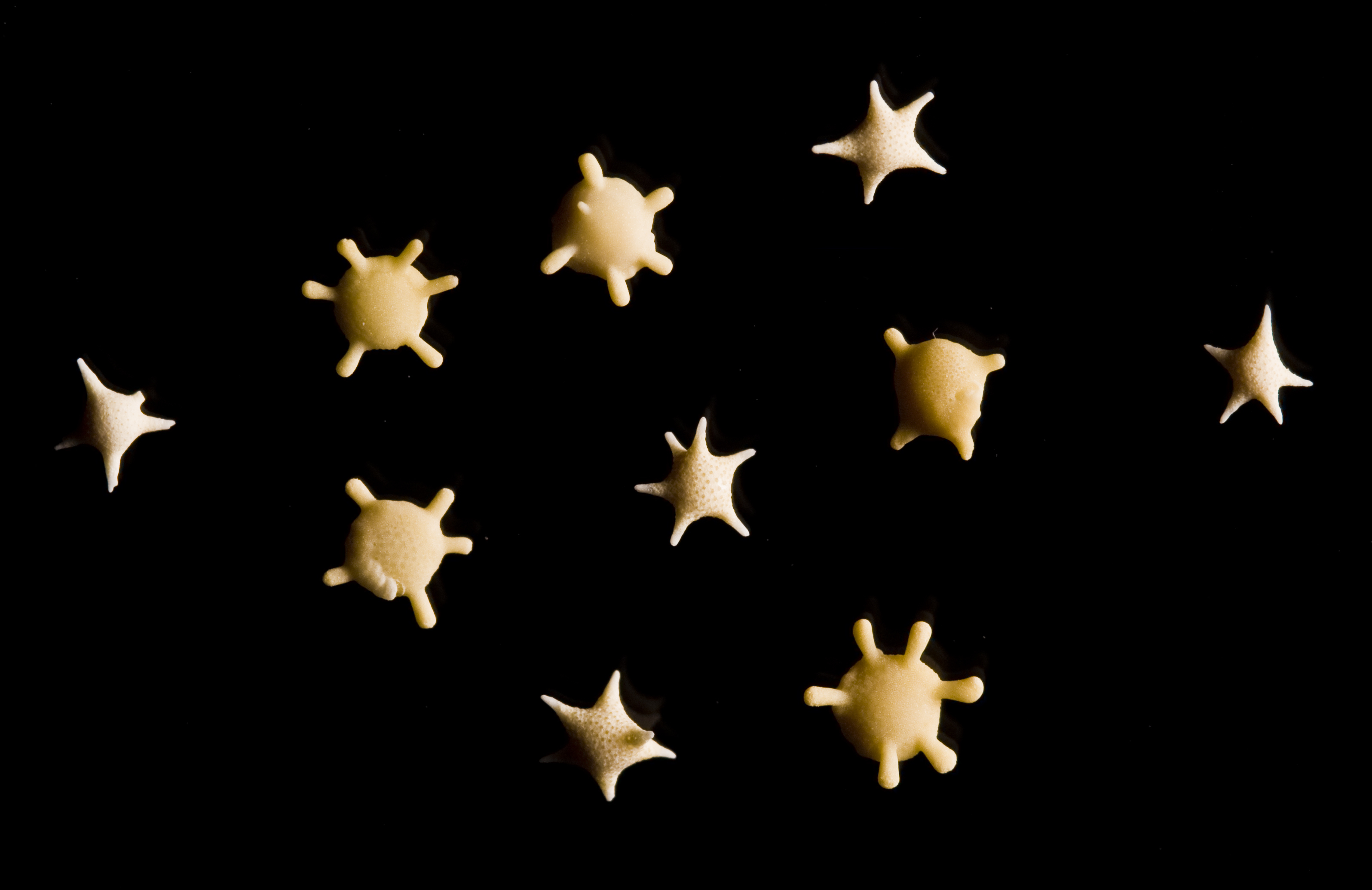 10 grains of star shaped sand collected from southern Japan<div class='credit'><strong>Credit:</strong> 10 grains of star shaped sand collected from southern Japan</div>