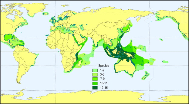 Seagrass And Seagrass Beds Smithsonian Ocean Portal - Number of oceans