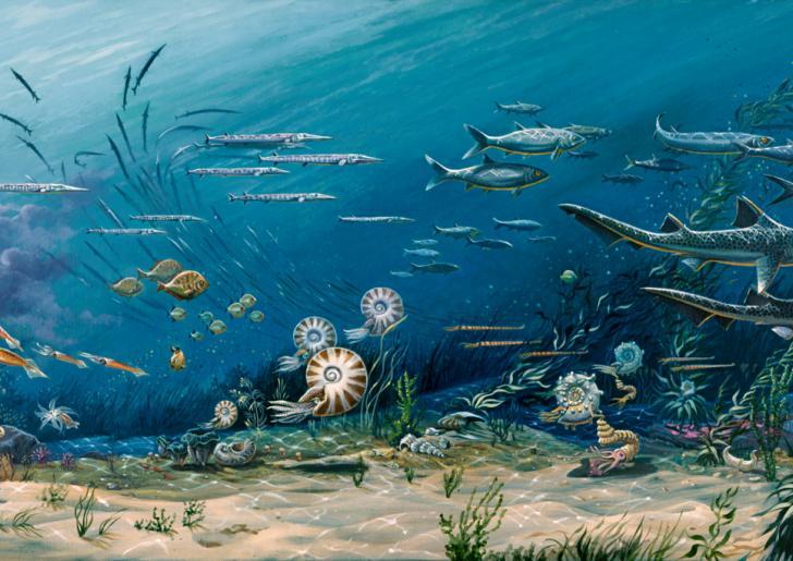 Ocean Through Time Smithsonian Ocean