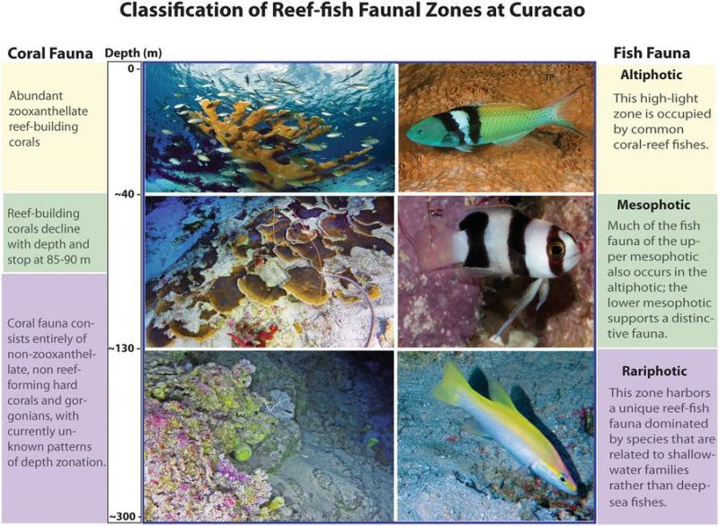 A chart that shows the various classification of reef zones off Curaçao.