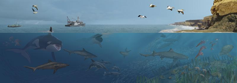 An illustration depicting many sea animals living in the modern seas off Angola.