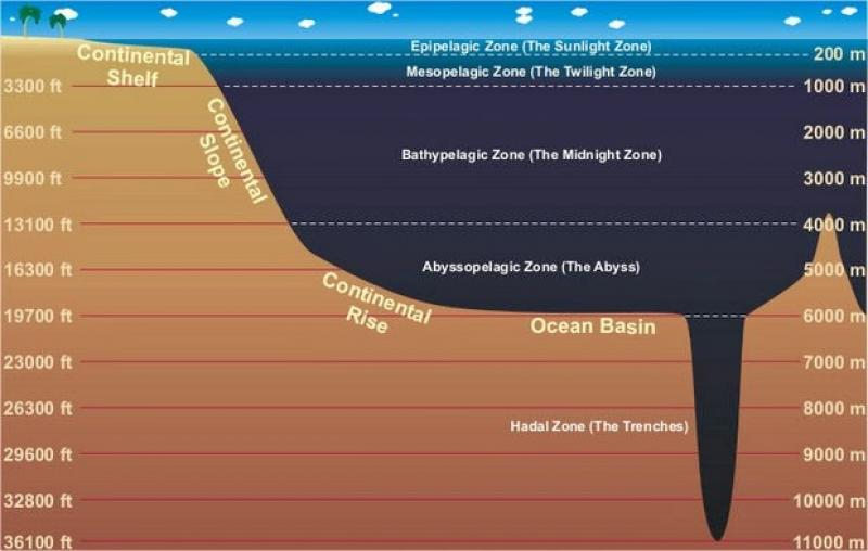 The Deep Sea Smithsonian Ocean