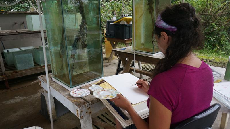 Artist Irene Kopelman draws a mangrove root held in specially constructed aquaria.