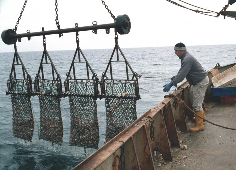 Dredges used to catch king scallops in the U.K.