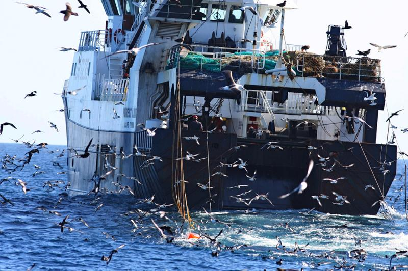 "Hundreds of birds congregate around the trawl fishing vessel. The orange ""bird scaring lines"" keep the birds from flying into the trawl cables where they can accidentally get caught and die."