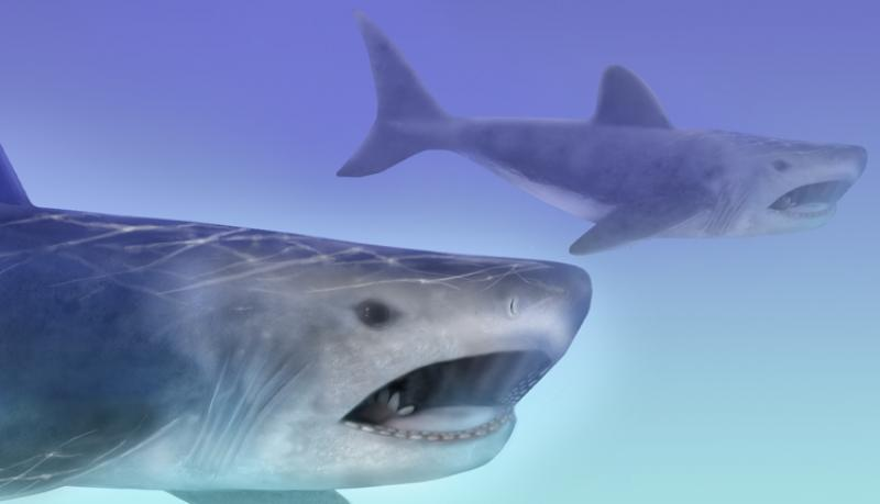 Artistic rendering of an ancient shark, Helicoprion.