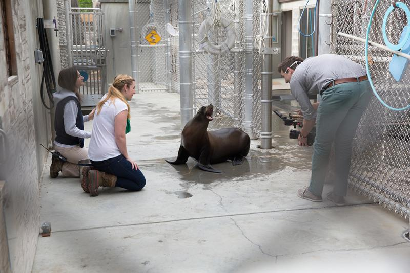 Leftwich and her team have spent hours filming captive sea lions at Smithsonian's National Zoo, trying to get clear video footage of the animals clapping so they can examine the way their flippers move from frame to frame.