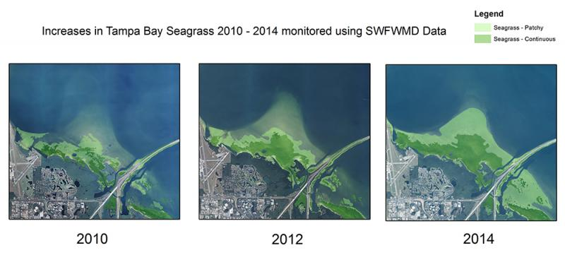 Increase in Tampa Bay Seagrass 2010-2014