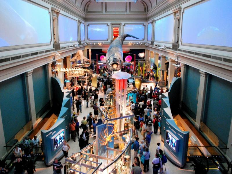 The Sant Ocean Hall is the National Museum of Natural History's largest exhibit, providing visitors with a unique and breathtaking introduction to the majesty of the ocean