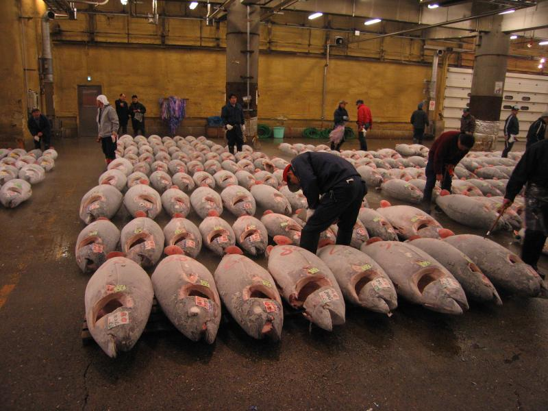 Tuna in a warehouse waiting to be sold at market.