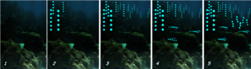 "This is a series of images showing how a typical nightly courtship display would look like, where certain males initiate the display (2), others follow (3), and different species display their own unique ""light shows"" nearby (4 and 5)."