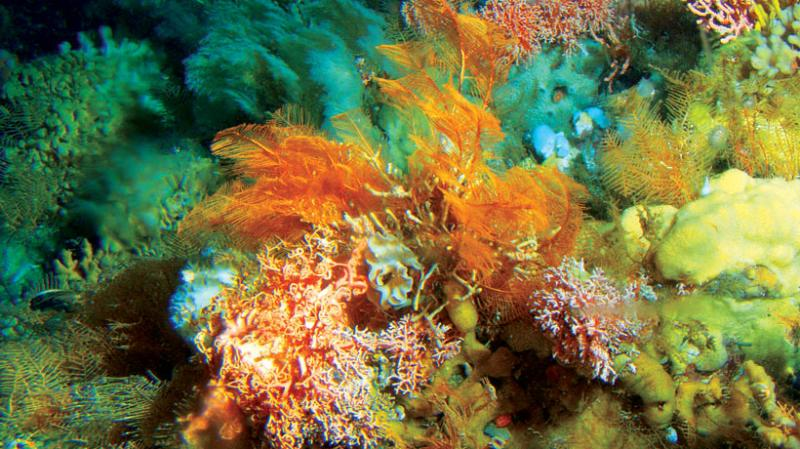 Radiocarbon dating of deep sea corals