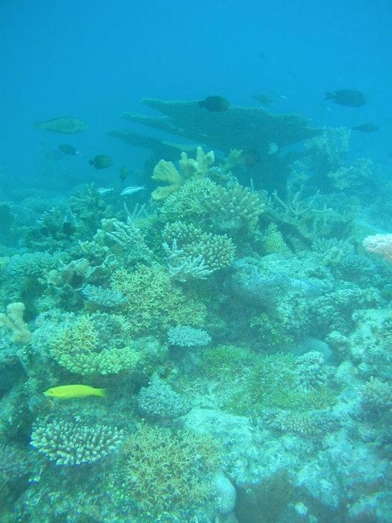 Half a century after nuclear testing blasted the reefs of Bikini Atoll, corals have recovered.