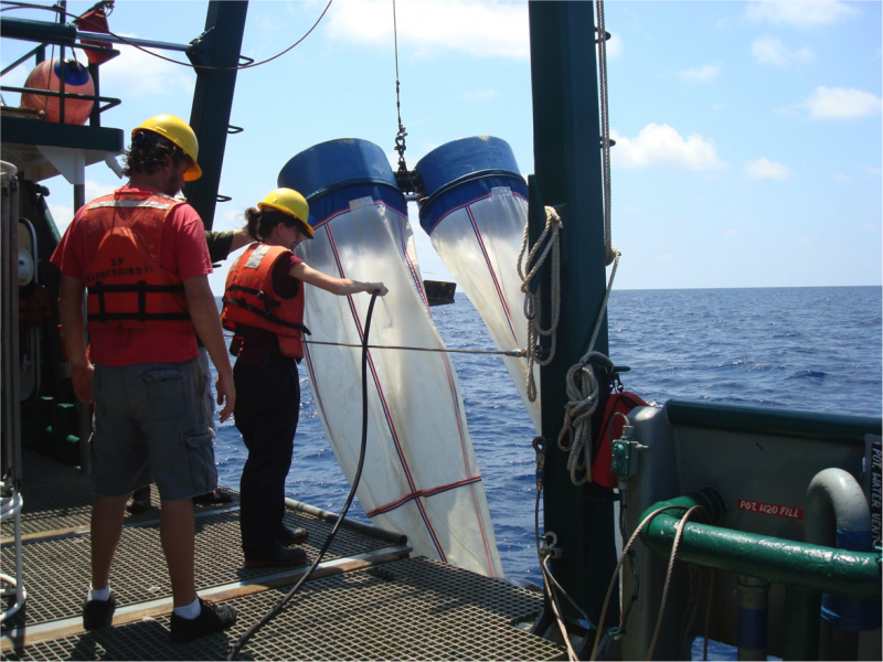 Jeff Chanton's students collect plankton in large nets called plankton tows during the May 2012 R/V Weatherbird II Cruise in the Gulf of Mexico.