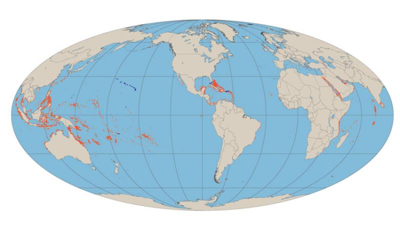 Shallow water coral reefs straddle the equator worldwide.