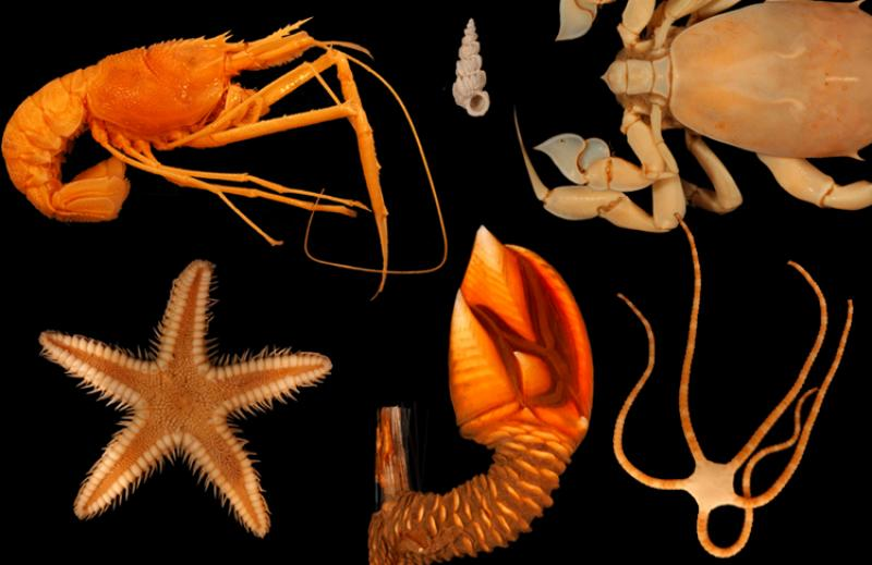 Photo collage of six species of invertebrates.