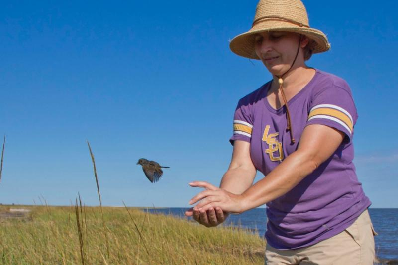 Sabrina Taylor, a wildlife biologist at Louisiana State University and lead scientist for the Gulf of Mexico Research Initiative, releases a seaside sparrow (Ammodramus maritimus) in the Louisiana marsh.