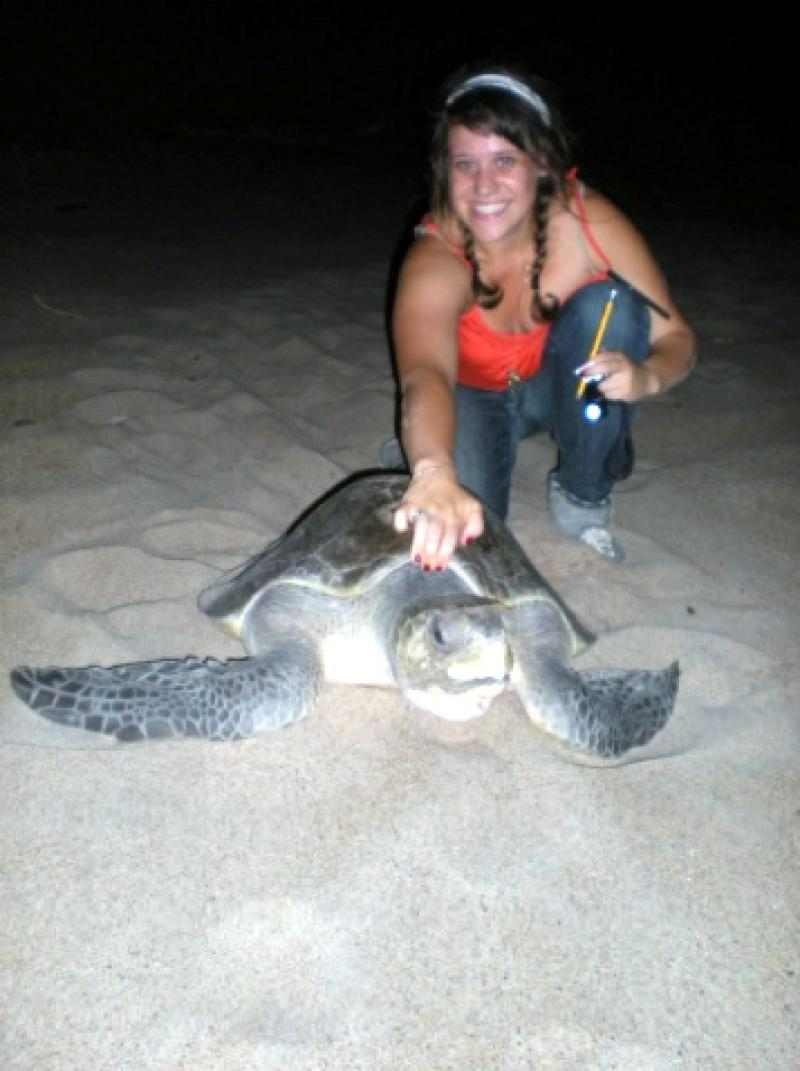 Amanda Feuerstein with a nesting olive ridley (Lepidochelys olivacea). Feuerstein is a co-author of a study that surveyed algae, crustaceans, mollusks, and other epibionts that live on the turtles in the Pacific Ocean.