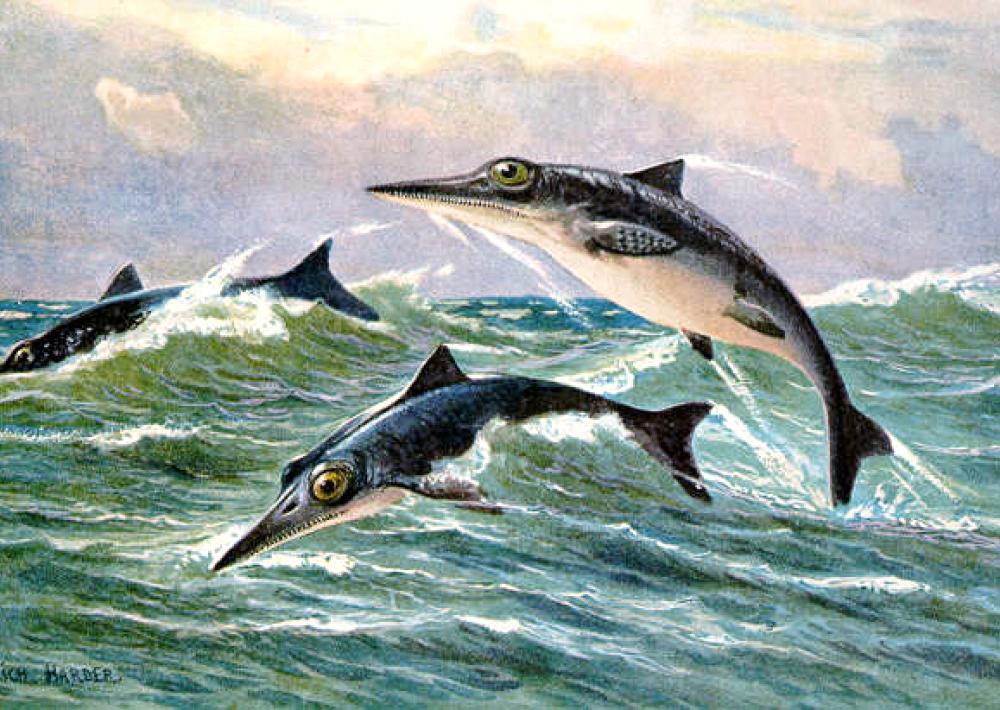 ichthyosaurs frolic in the waves