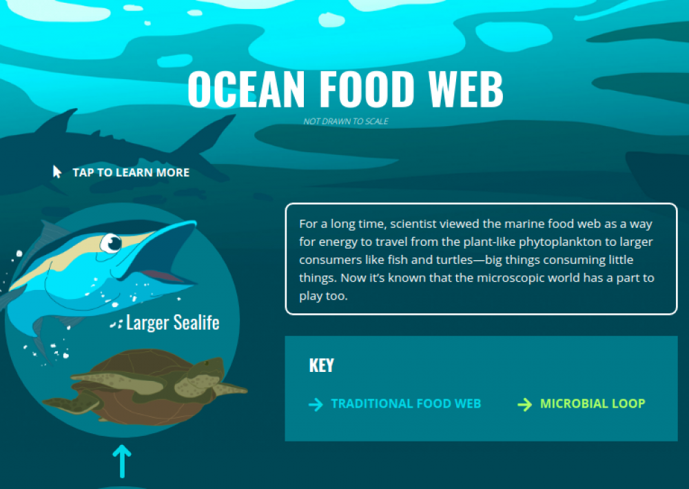 The Missing Microbial Link in the Ocean Food Web