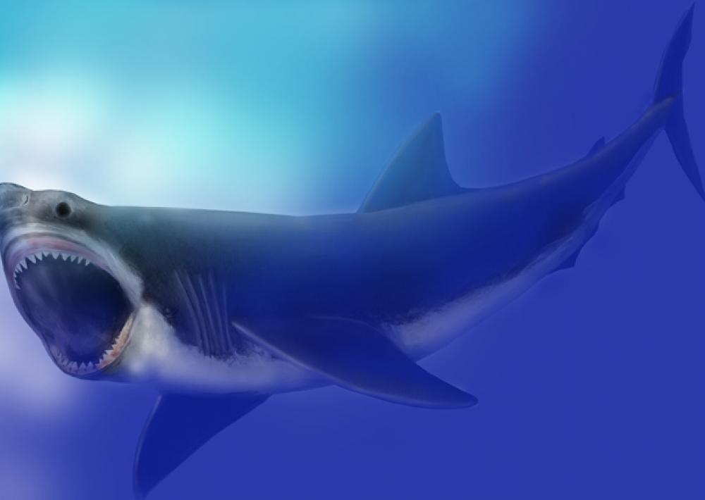 The Megalodon Smithsonian Ocean