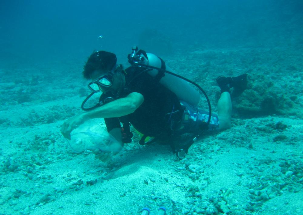 A diver collects water samples.