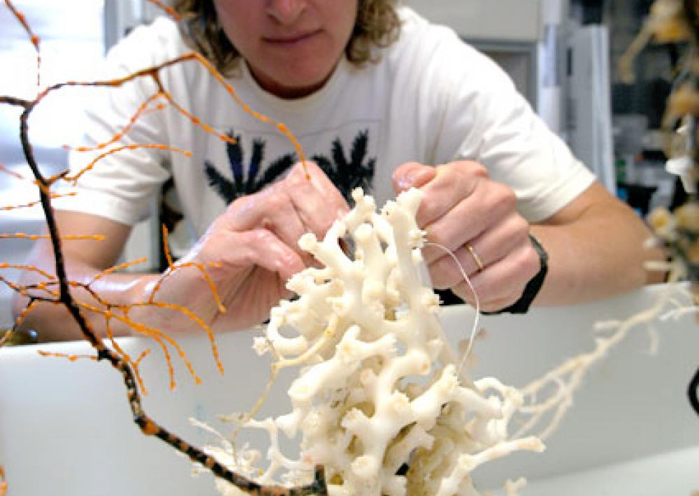 Scientist Martha Nizinski examines a sample of the deep-sea coral Lophelia pertusa, collected 600-m (1,969-ft) deep off the coast of the southeastern United States.