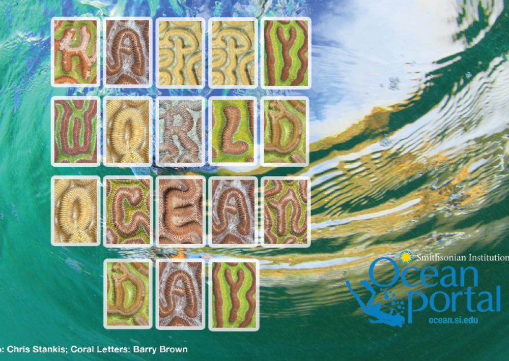 Coral Letters: A Message from the Corals of Curacao | Smithsonian Ocean
