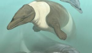 Offshore Peru, during the Eocene (~56-34 million years ago), showing two archaeocetes (ancient whales): Ocucajea picklingi and Supayacetus muizon.