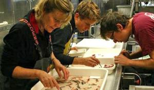 Ruth Meadows examines specimens as part of her Teacher at Sea experience.  NOAA Teacher at Sea Ruth Meadows sorts specimens aboard the NOAA Ship Henry B. Bigelow as part of the Mid-Atlantic Ridge Ecosystem (MAR-ECO) project.