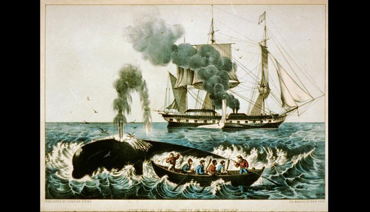 Whalers harpoon a right whale in this 1856 Currier & Ives print.