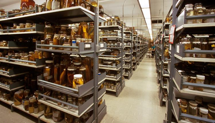 An image of collections storage at the Smithsonian National Museum of Natural History.
