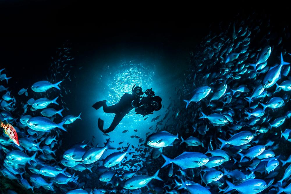 A diver swims with a camera in a school of fish