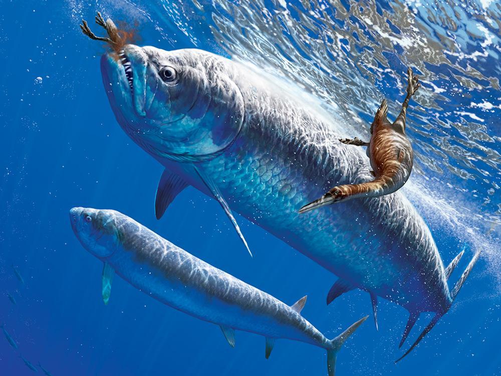 xiphactinus fish - 1000×750