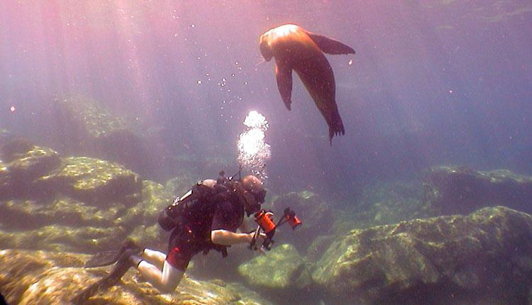 A sea lion in the Sea of Cortez observes Auster as he observes reef fishes.