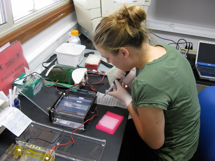 Researcher Aimee Ellison tests samples for DNA barcoding at the Gump Field Station on Moorea.