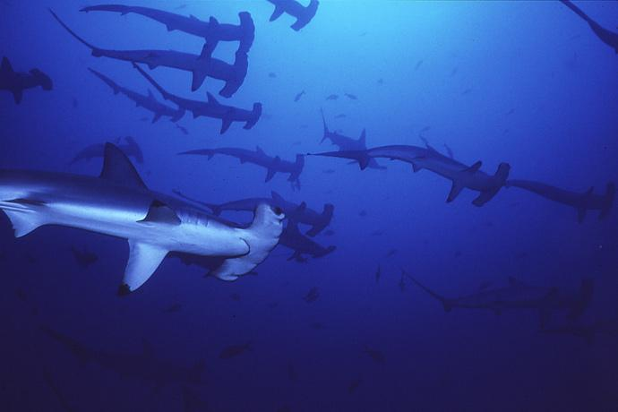 The Malpelo Fauna and Flora Sanctuary site in Colombia was inscribed on the World Heritage List in 2006. The marine park surrounding Malpelo Island is the largest no-fishing zone in the Eastern Tropical Pacific, providing critical refuge for threatened and