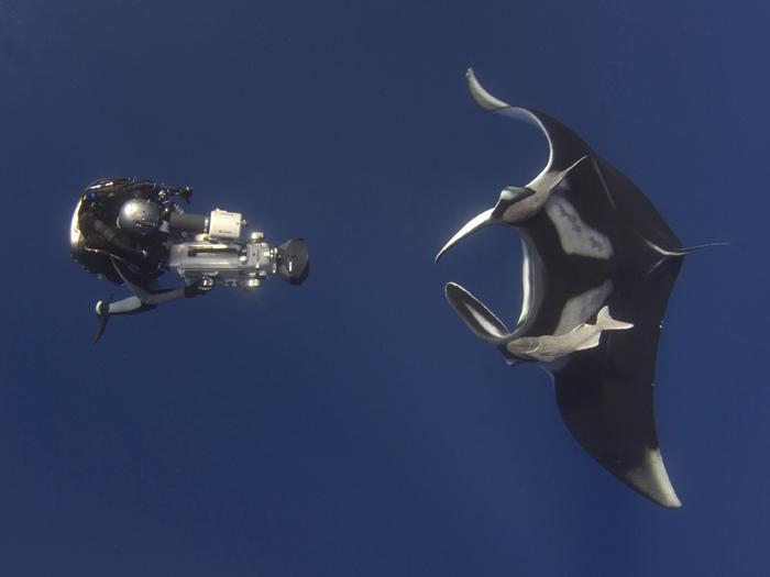 diver meets manta ray smithsonian ocean. Black Bedroom Furniture Sets. Home Design Ideas