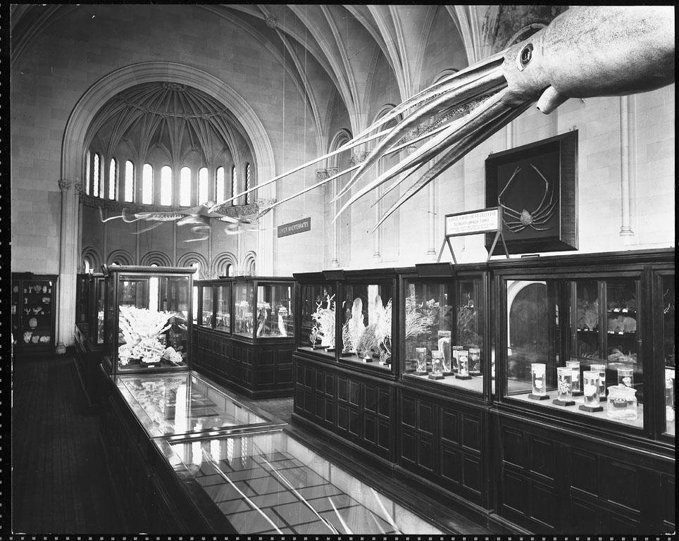 "The ""Lower Invertebrates"" exhibit in Smithsonian Institution Building in 1901 included models of a giant squid and an octopus."