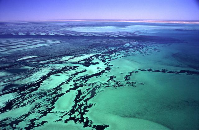The Shark Bay site in Australia was inscribed on the World Heritage List in 1991. The site is home to the world's richest and largest sea-grass beds; five species of endangered marine mammals, including dugongs (Dugong dugon), which feed on the grass; and
