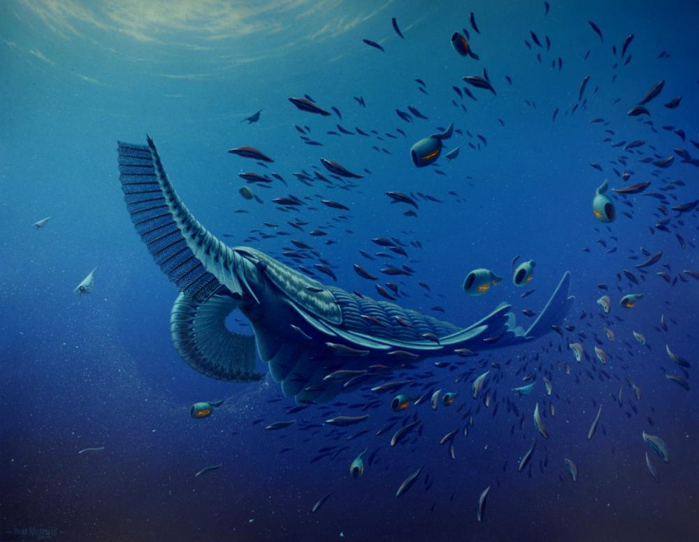 The first known filter feeder is a large shrimp-like creature called Tamisiocaris borealis. The feather-like structures on its head were used to rake plankton from the sea.