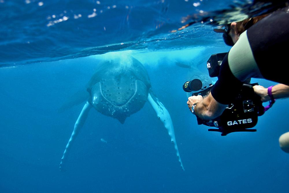 An underwater photo of a diver with a camera shooting video of a whale.