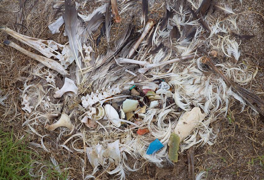 Artist Chris Jordan, who took these photos, is making a documentary about Laysan albatrosses on Midway Atoll and their plastic problem. Watch the trailer.