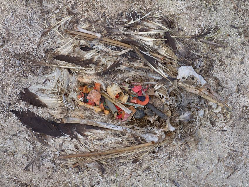 An estimated 5 tons of plastic are fed to albatross chicks each year at Midway Atoll.