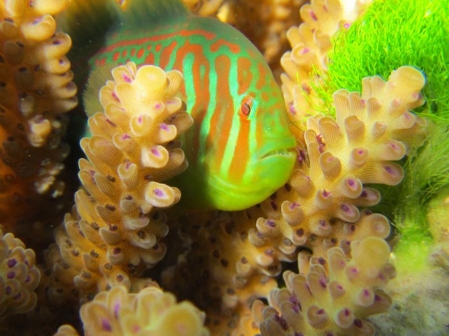 Bizarre and Beautiful Coral Reef Animals | Smithsonian Ocean - photo#42