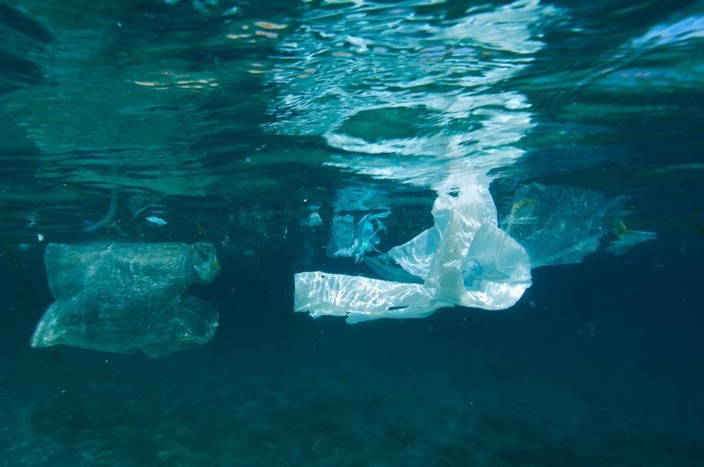 A plastic bag floats at sea.