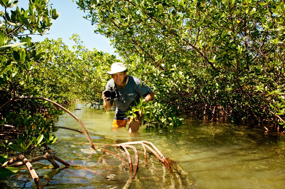 Photographer Brian Skerry walks knee deep in a mangrove in the Bahamas.