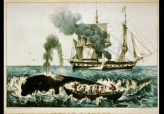Yankee Whalers: An 1856 Currier & Ives print shows whalers harpooning a right whale.